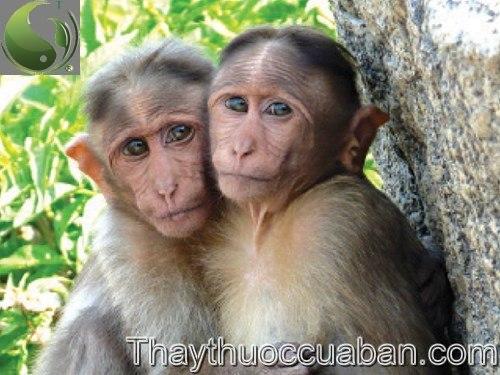Hình ảnh con khỉ, cao khỉ