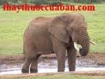 Da voi chữa mụn nhọt lâu liền miệng