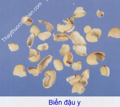 Hình ảnh vị thuốc biển đậu y