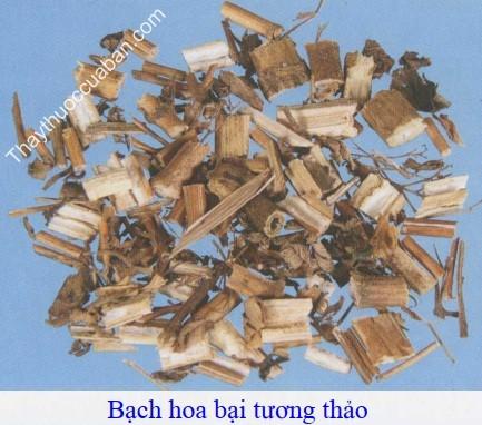 Hình ảnh vị thuốc bạch hoa bại tương thảo