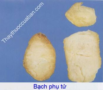 Hình ảnh bạch phụ tử