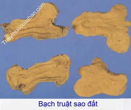 Hình ảnh bạch truật sao đất