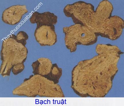 Hình ảnh vị thuốc bạch truật