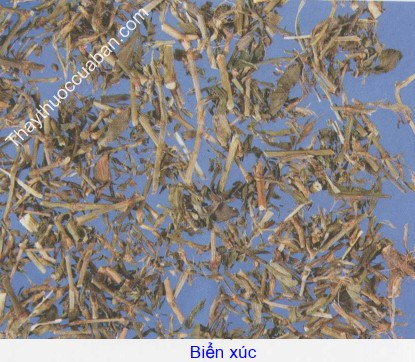 Hình ảnh vị thuốc biển xúc