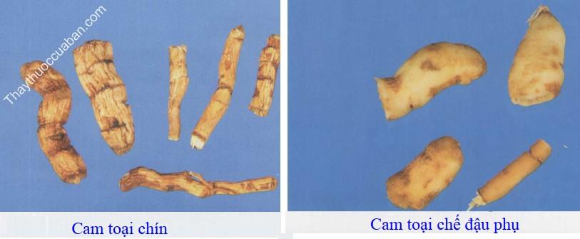 Hình ảnh vị thuốc cam toại chế