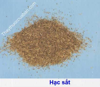 Hình ảnh vị thuốc hạc sắt