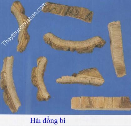Hình ảnh vị thuốc hải đồng bì
