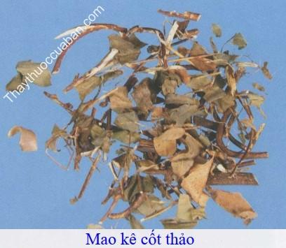 Hình ảnh vị thuốc mao kê cốt thảo