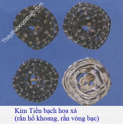 Hình ảnh kim tiền bạch hoa xà