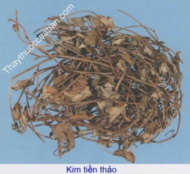 Hình ảnh vị thuốc kim tiền thảo