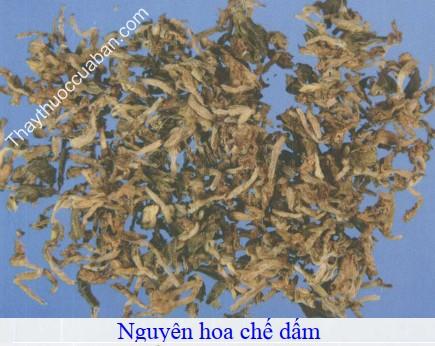 Hình ảnh vị thuốc nguyên hoa chế dấm