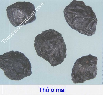 Hình ảnh vị thuốc ô mai thổ