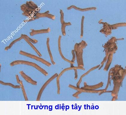 Hình ảnh trường diệp tây thảo