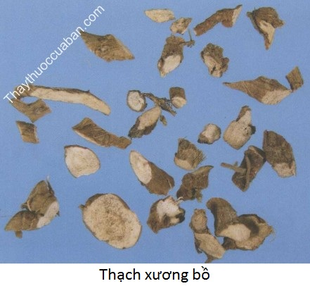 Hình ảnh vị thuốc Thạch xương bồ