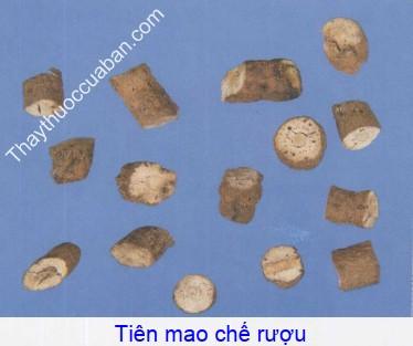 Hình ảnh vị thuốc tiên mao chế rượu