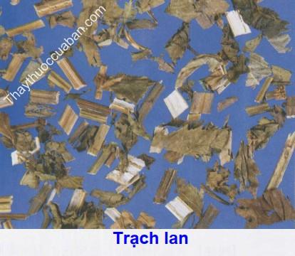 Hình ảnh vịt thuốc trạch lan