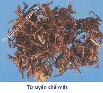 Hình ảnh vị thuốc tử uyển chế mật