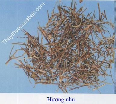 Hình ảnh vị thuốc hương nhu