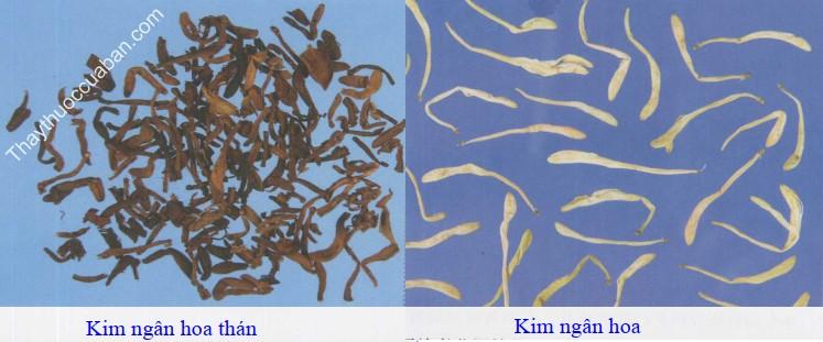 Hình ảnh vị thuốc kim ngân hoa