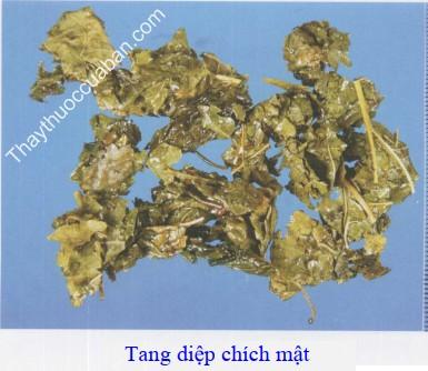 Hình ảnh vị thuốc tang diệp chích mật